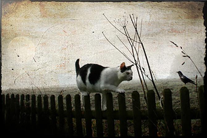 dreams-cat