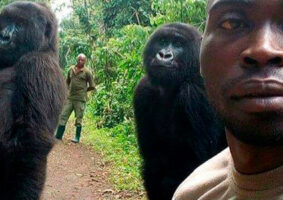 Macacos ficam em pé para selfie
