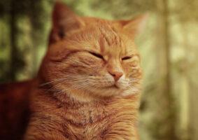 Piscar lentamente é uma boa maneira de se comunicar com seu gato