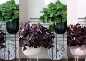 Time-lapses mostram como as plantas se movimentam