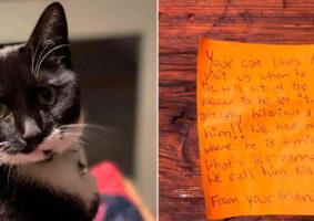Gato que levava vida dupla criou amizade inesperada entre vizinhos