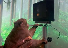 Macaco joga pong com o pensamento em vídeo da Neuralink
